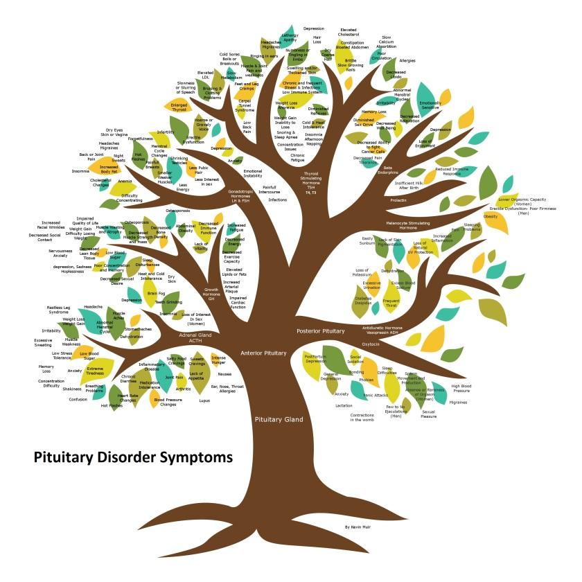 Pituitary Tree